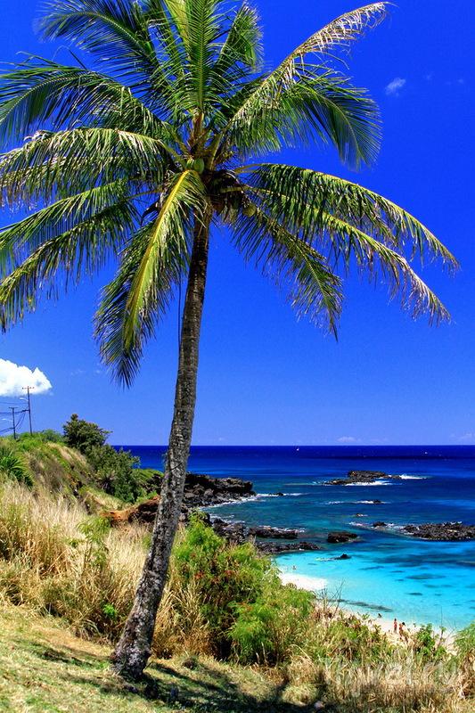 Оаху, Waimea Bay Beach Park / США