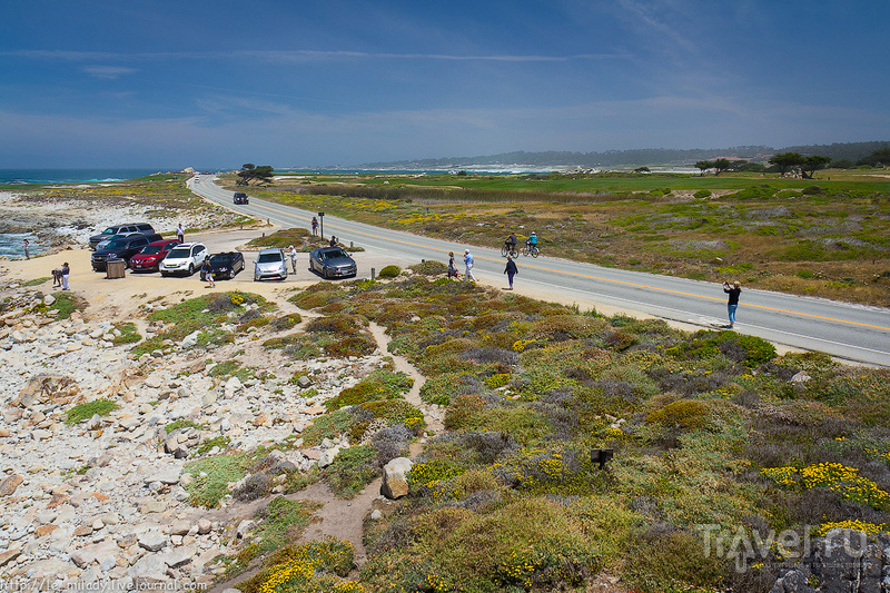 Самая красивая дорога – 17 mile drive / Фото из США