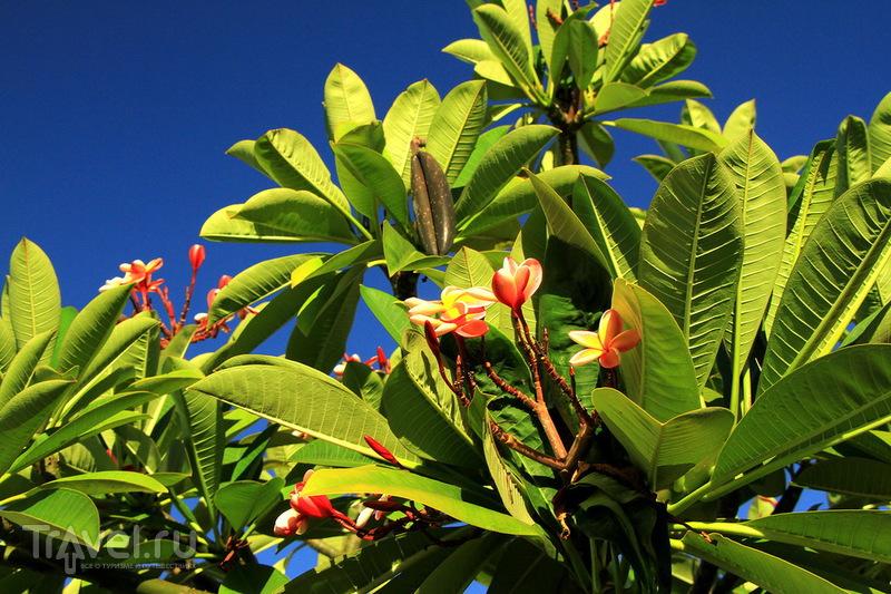 Западное и северное побережье острова Оаху / США