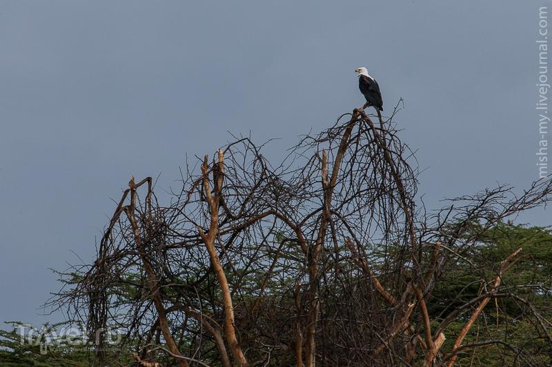 Озеро Найваша / Кения