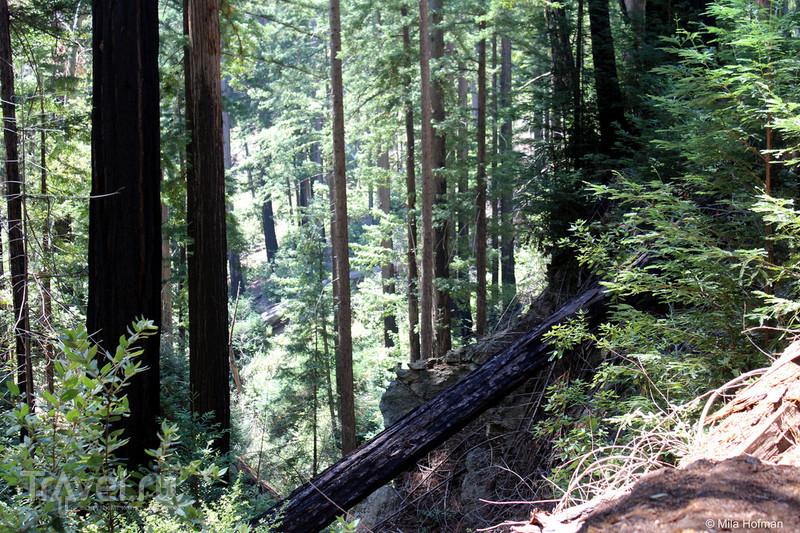 Калифорния: чудеса Big Sur / Фото из США