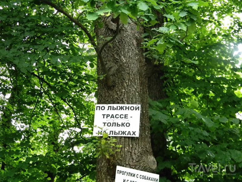 """""""Наблюдательность и наблюдательность!"""" Антропоидник в Колтушах / Россия"""