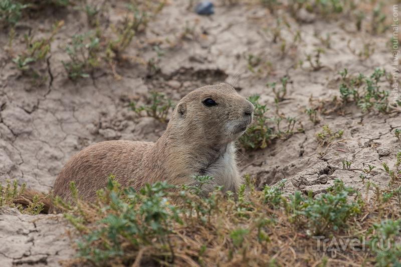 США. Национальный парк Badlands / Фото из США