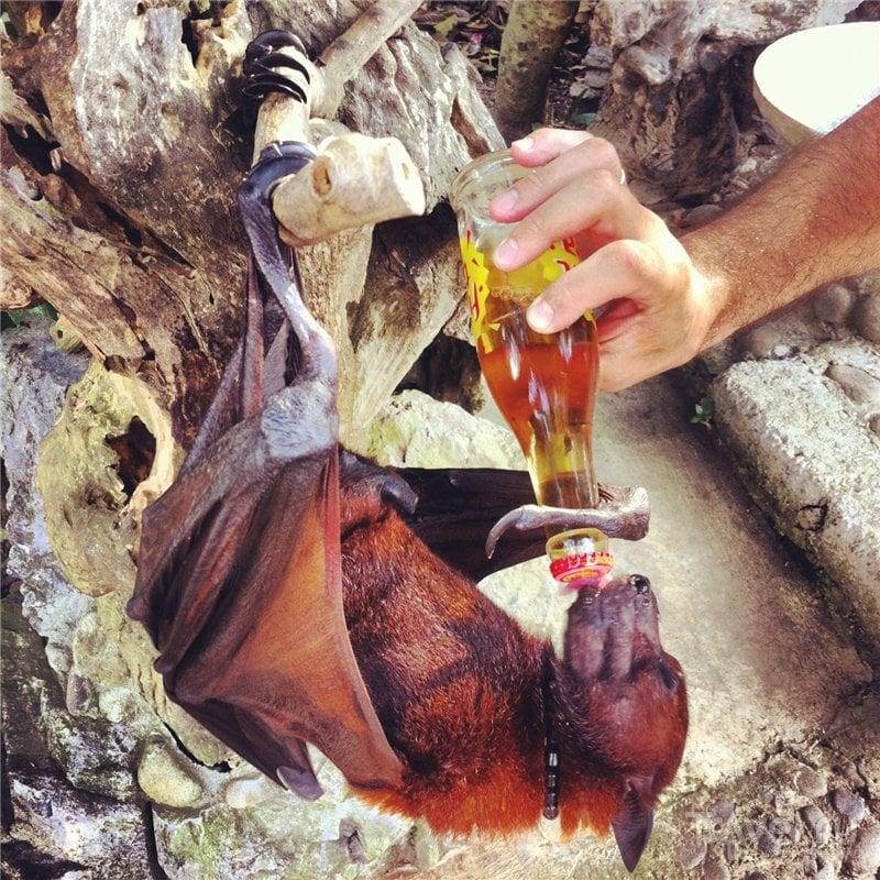 Обезьяны, мусанг и летучая собака на Бали / Индонезия