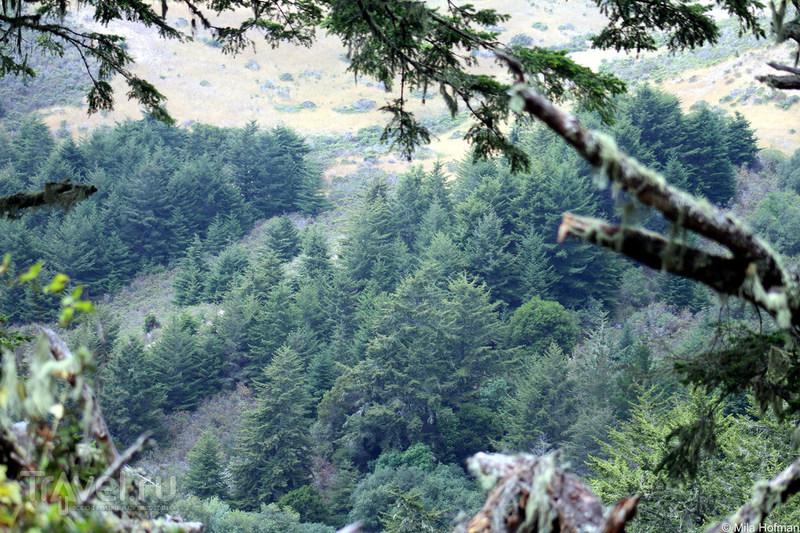 Butano SP, или затерянные в тишине / США