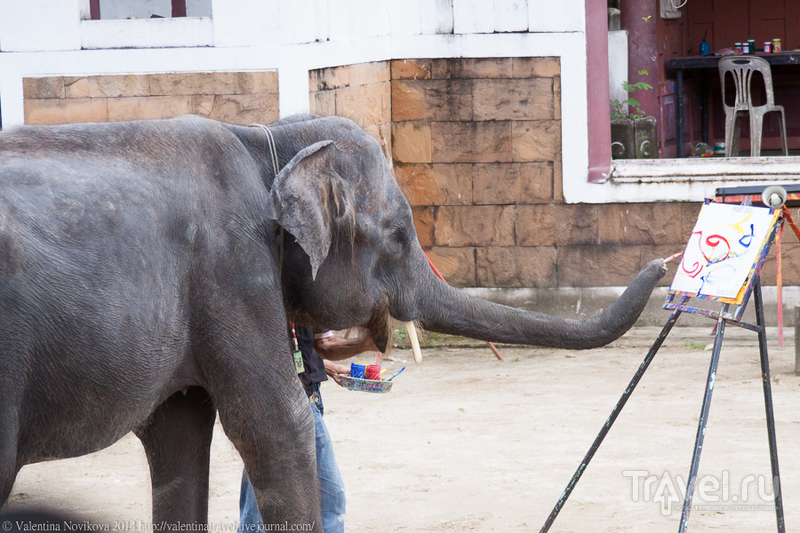 Пхукет. Зоопарк. Шоу / Таиланд