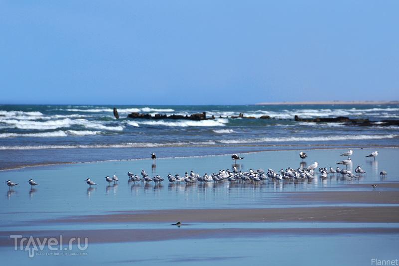 Тарфая. Небо, море, песок и одиночество / Фото из Марокко