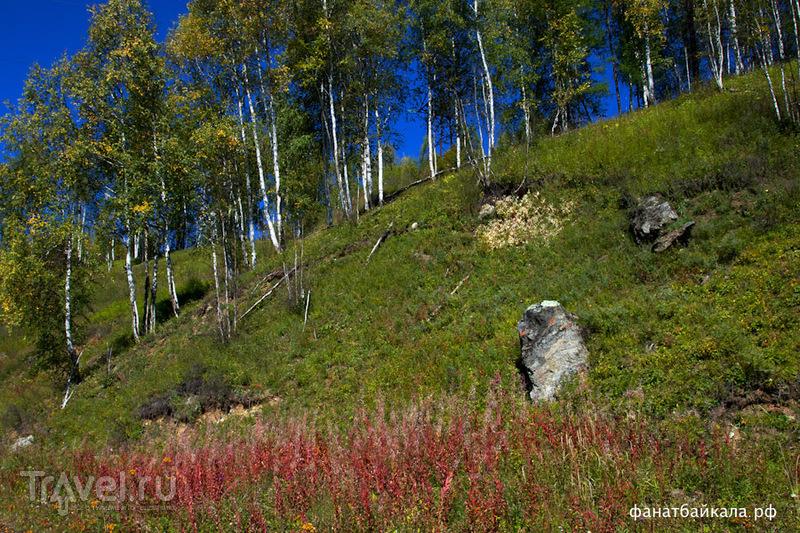 Краски уходящего лета / Фото из России