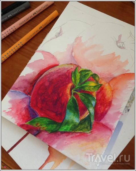 Агротуризм в Испании: сбор персиков под Тивиссой / Испания