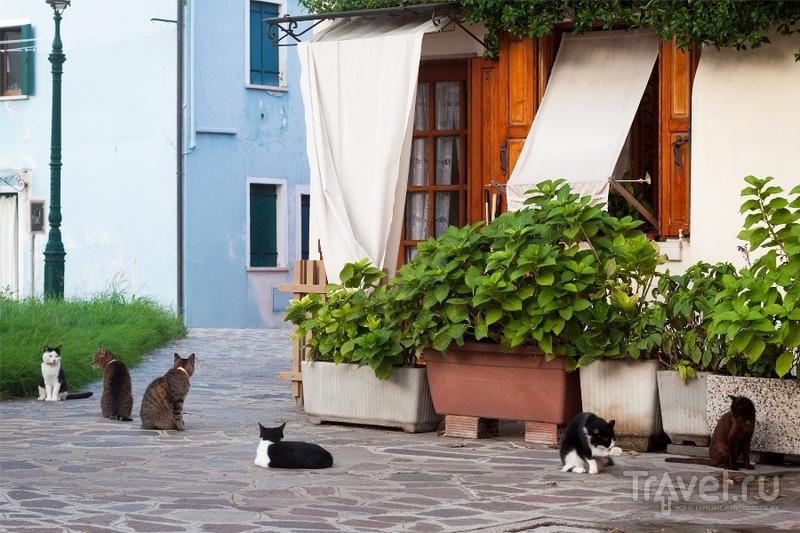 Остров Бурано. Италия / Италия