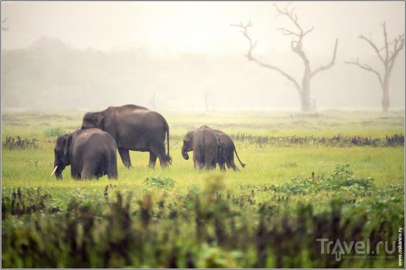 Слона-то мы и приметили / Шри-Ланка