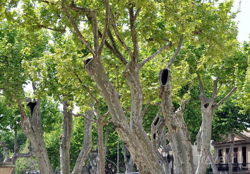 Сен-Тропе / Фото из Франции