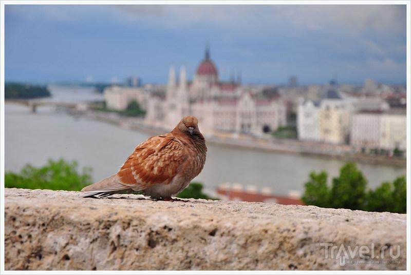 Факты и общие впечатления о Будапеште / Венгрия