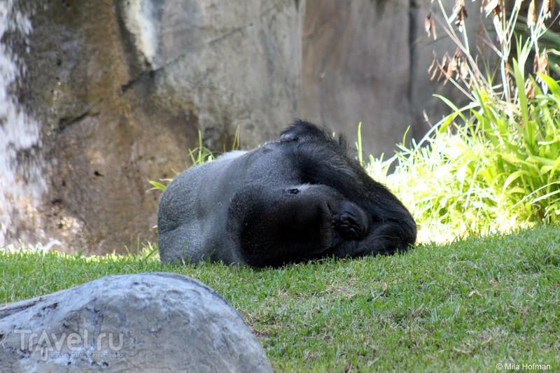 San Diego Zoo: забавные / США
