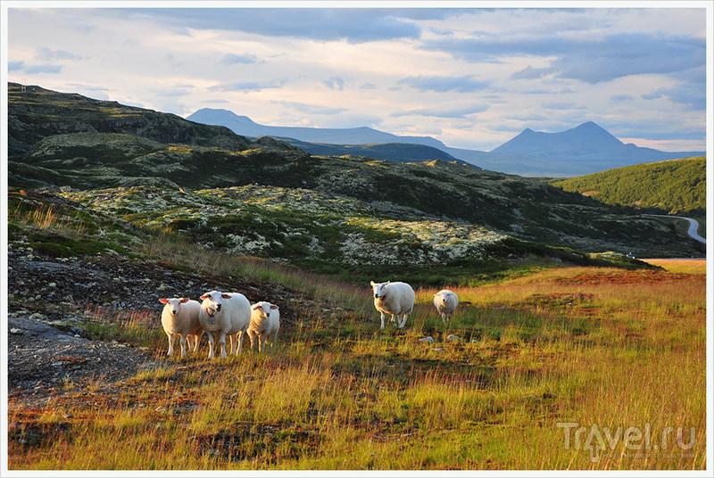 Очарование высокогорной норвежской тундры / Фото из Норвегии