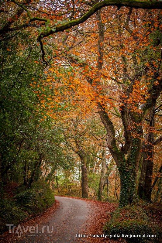 Осенний Корнуолл / Великобритания