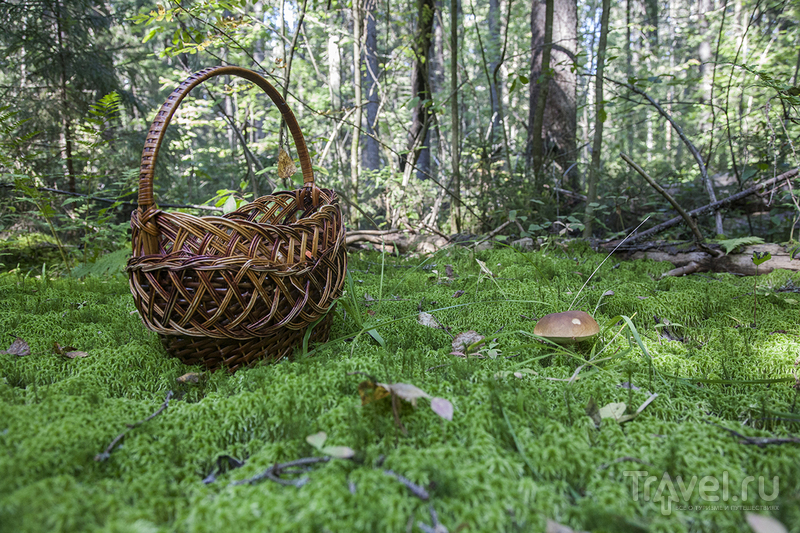 Поездка в Тверскую область за грибами / Россия