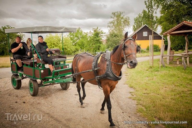 Замок Леднице - Парк! / Фото из Чехии