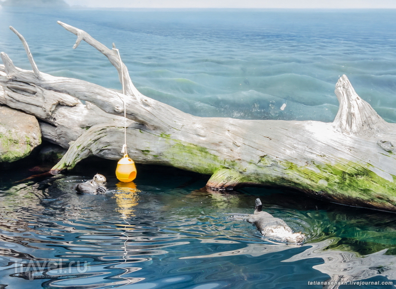 Пингвинчики и Ко / Португалия