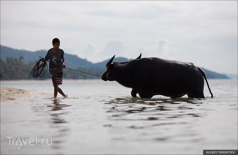 Вспоминая лето... Тайский остров Самуи / Фото из Таиланда
