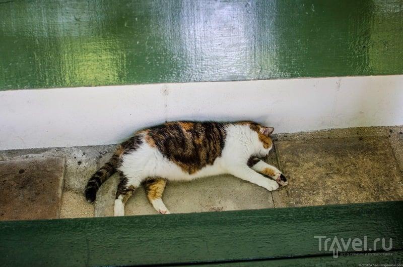 Коты Хемингуэя / США