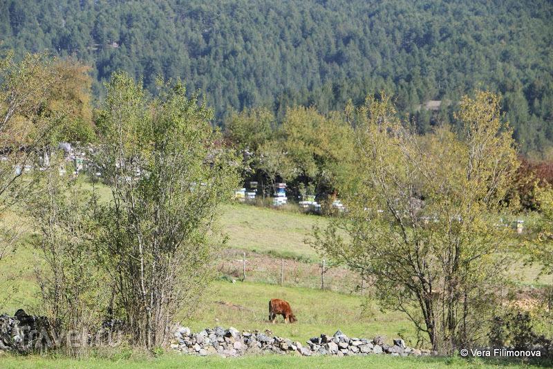 Воскопоя в сентябре и октябре / Албания