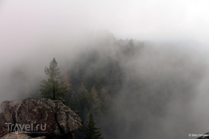 Sequoia and Kings Canyon парк / Фото из США