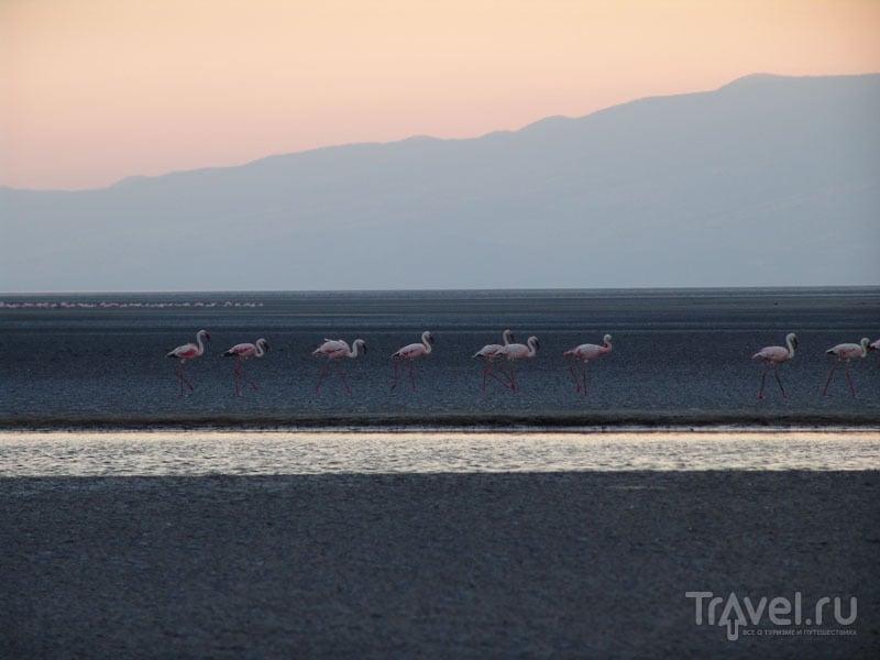 Малые фламинго чувствуют себя в озере комфортно / Танзания