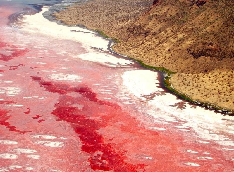 Озеро Натрон красного цвета / Танзания