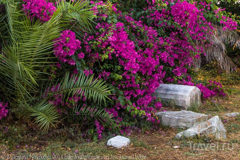 Последние приКОСновения лета / Фото из Греции