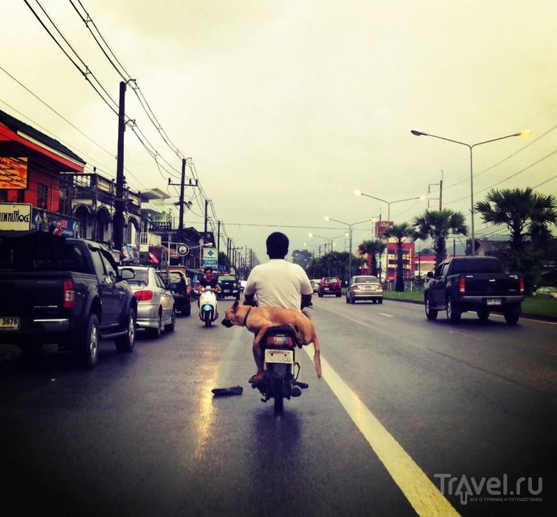 Мопед в Таиланде. Как укротить стихию? / Таиланд