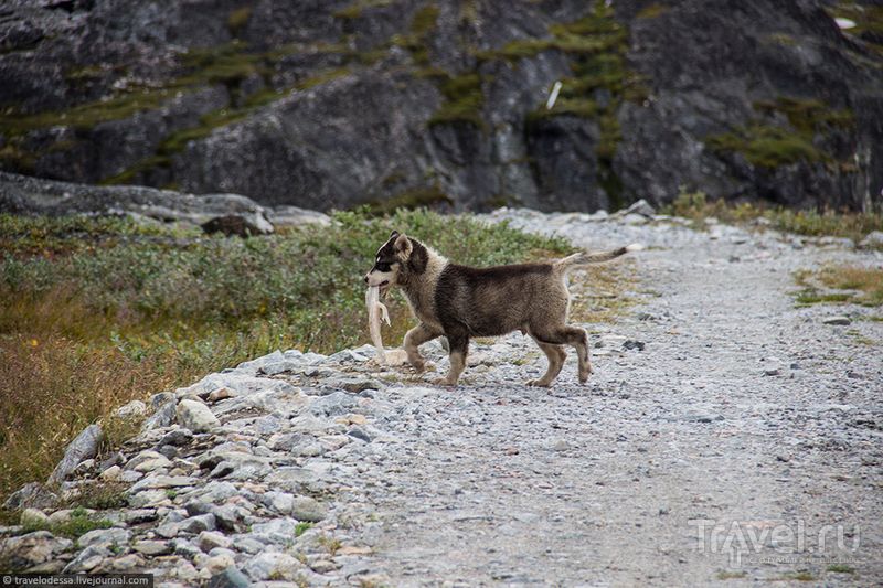 Собачья жизнь в Гренландии / Гренландия