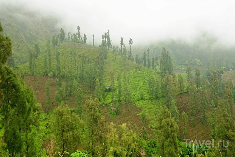 Бромо в сезон дождей / Фото из Индонезии