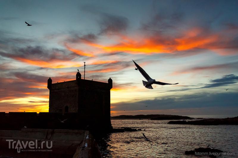 Марокко. Эссуэйра. Дневной дозор / Фото из Марокко