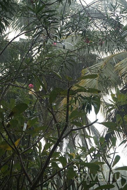 Дождь на Курамати. Мальдивы / Мальдивы