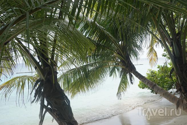 Пальмы над водою. Мальдивы / Мальдивы