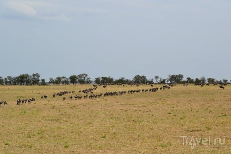 Самостоятельное сафари в Танзании. Серенгети. Великая миграция. Вулкан Олдуваи / Танзания