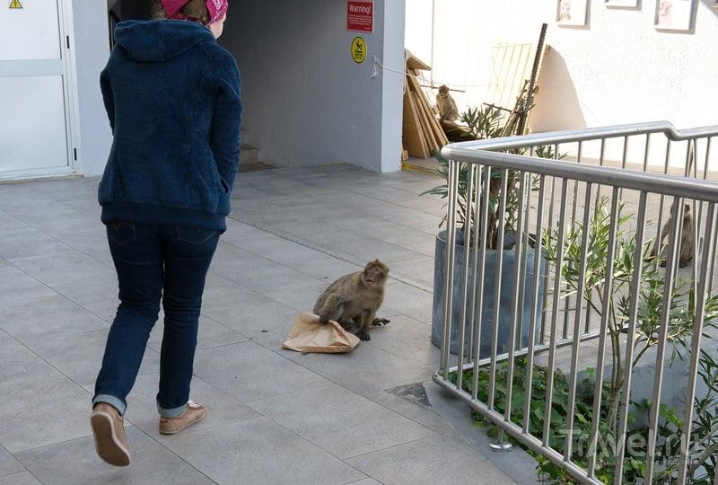 Гибралтарские негодяи / Гибралтар (Брит.)