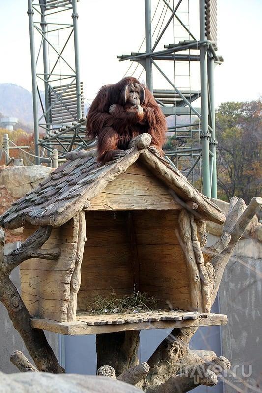 Зоопарк и ботанический сад в Seoul Grand Park / Фото из Южной Кореи