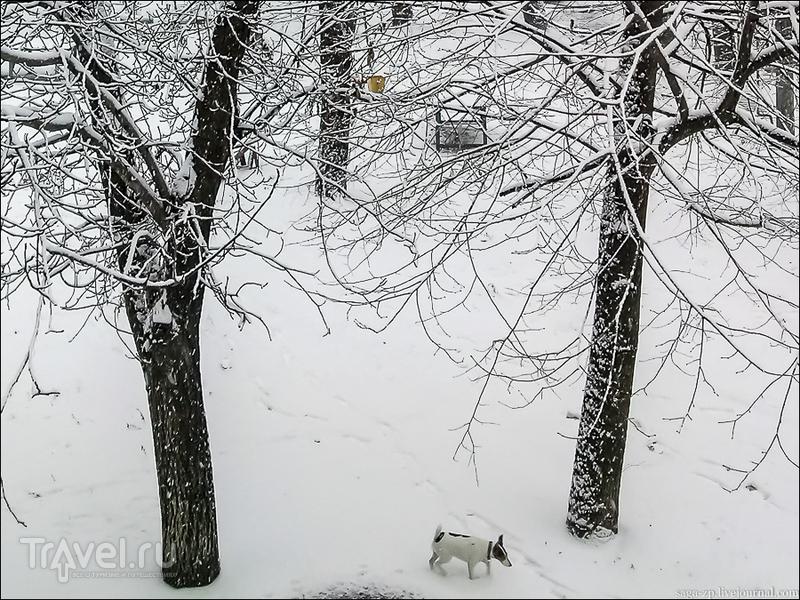 Метит землю зима / Украина
