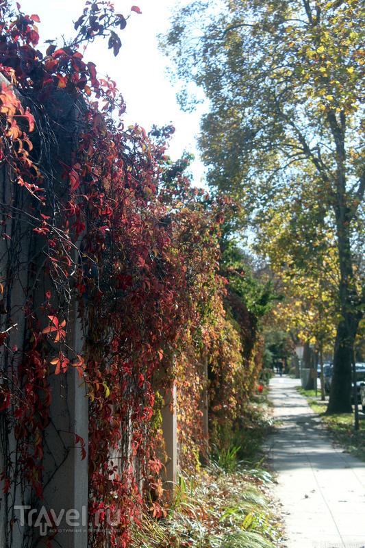 Осенний Berkeley / Фото из США