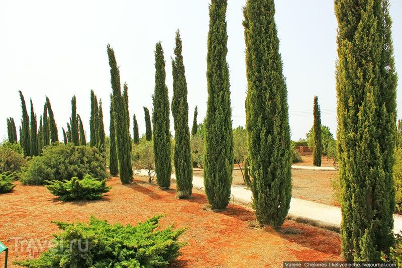 Природный лабиринт и лавандовая ферма, Кипр / Кипр