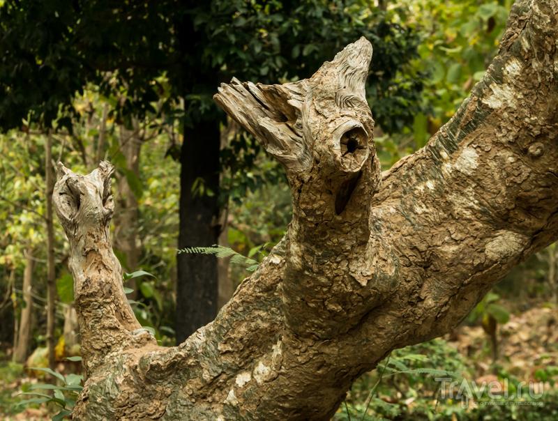Последний день ноября на вилле Бланш, Вунгтау. Субэкваториальный листопад / Вьетнам