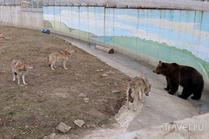 Ярославский зоопарк / Россия