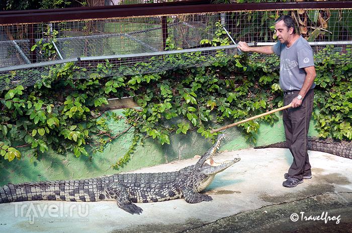 Парк крокодилов в Терремолиносе (Коста-дель-Соль, Испания) / Испания
