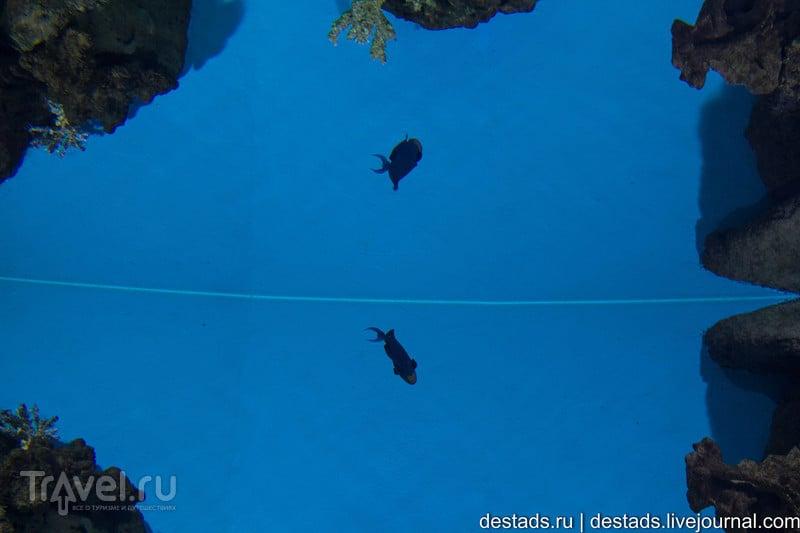 Океанариум в ТЦ Рио / Россия