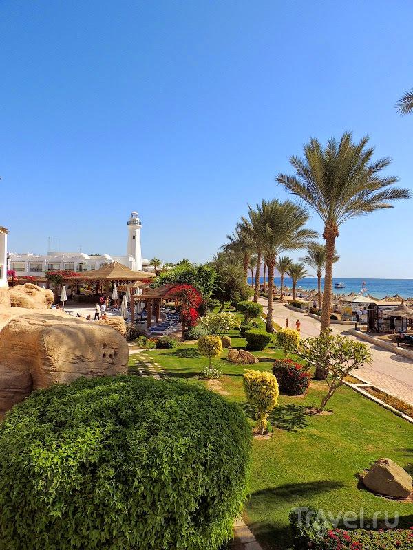 Египет: отель Melia Sinai - бюджетный отдых / Египет