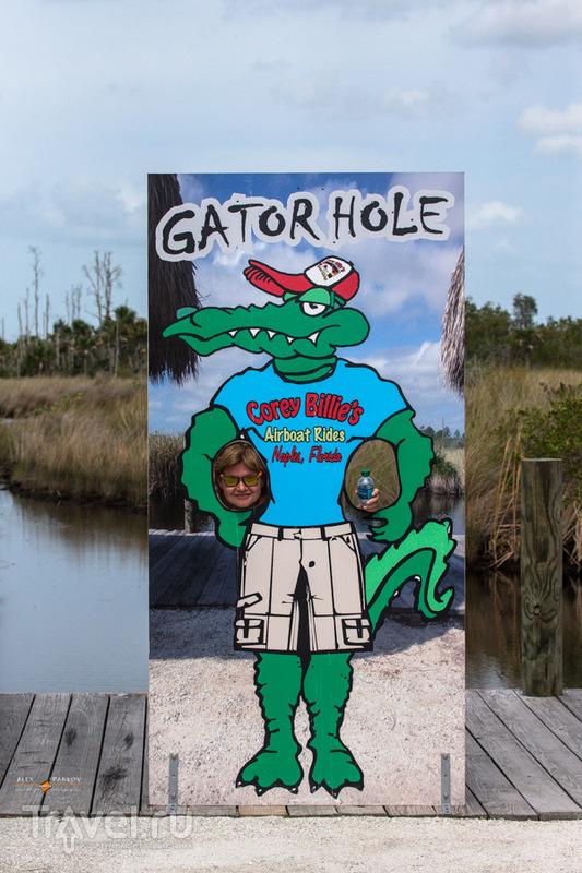 Флорида. Gator hole / США