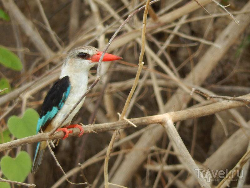 Зеленый сезон в Танзании / Фото из Танзании