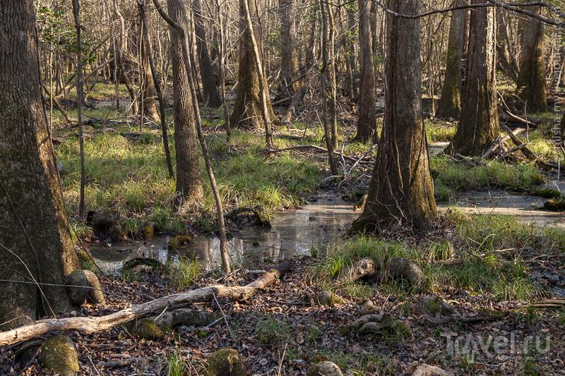США. Национальный парк Congaree / Фото из США